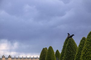 Crows of Versailles